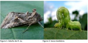 Monitoreo de lepidópteros mediante trampa de luz